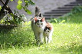 Cat with her kitten walking together in the garden — Stock Photo