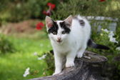 Cute funny kitten sitting near the flower bed — Stock Photo