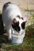 Cute kitten drinking milk from the glass — Stock Photo