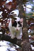 Cute three colored kitten climbing on the tree — Stock Photo