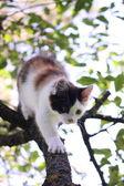 Leuk drie gekleurde katje klimmen op de boom — Stockfoto