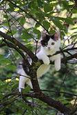 Cute kitten resting on the tree branch — Stock Photo