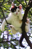 Cute kitten resting on the tree branch — Stock Photo
