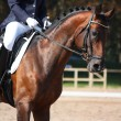 Bay horse portrait during dressage show — Stock Photo #38466417