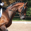 Bay horse portrait during dressage show — Stock Photo #38466431