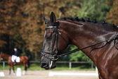Portret czarnego konia podczas konkurencji ujeżdżenia — Zdjęcie stockowe