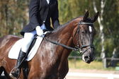 Black horse portrait during dressage competition — Stock Photo