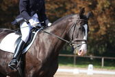 Black horse portrait during dressage competition — Stock Photo