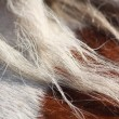 Stock Photo: Brown and white horse mane close up
