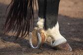 Close up of black horse hoofs — Stock Photo