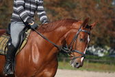Chestnut horse portrait with rider — Stock Photo
