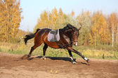 Beautiful bay horse galloping in autumn — Stock Photo