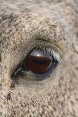 Close up of horse eye — Stock Photo