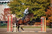 Young woman jumping barrier on brown horse in autumn — Stock Photo