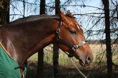 Vyděšený kůň v zeleném kabátě portrét v létě — Stock fotografie