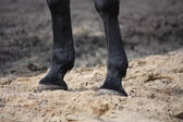 Close up of horse legs — Stockfoto