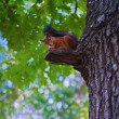 Squirrel on a tree DSC_0088_1279 — Stock Photo