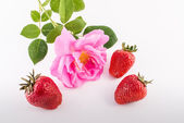 Strawberries and rose flower — Stock Photo