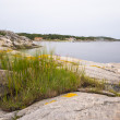 Swedish coast — Stock Photo #13473910
