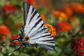 Graceful butterfly — Stock Photo