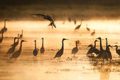 Herons at sunset — Stock Photo