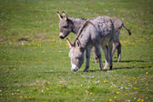 Donkey closeup — Photo