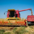 Stock Photo: Combine harvesting wheat
