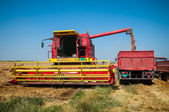 Combine harvesting wheat — Photo