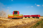 Combine harvesting wheat — 图库照片