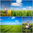 Farmer fields collage — Stock Photo