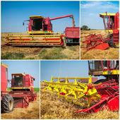 Wheat harvest - collage — Stock Photo