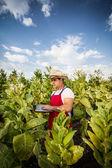 Tabaco granjero — Foto de Stock
