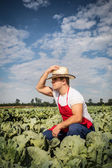 Farmer at cabbage field — Stock Photo