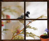 Chickadee seen through a window, longing for Spring. — Stock Photo