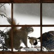 Funny animals in a snowstorm, seen through the farm house window. — Stock Photo