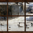 Winter pond with ducks seen through cottage window. — Stock Photo #25316989