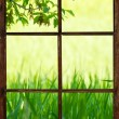 Window view of a meadow. — Stock Photo