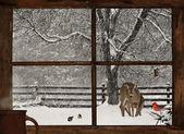 Kartka świąteczna. — Zdjęcie stockowe