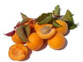 Die reife aprikosen-closeup auf weißem hintergrund — Stockfoto