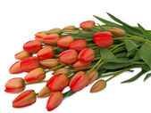 Bouquet of red tulips closeup — Stock Photo