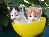 Två små kattungar i en gul skål — Stockfoto