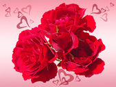 Red roses with hearts (Valentine's day) — Stock Photo