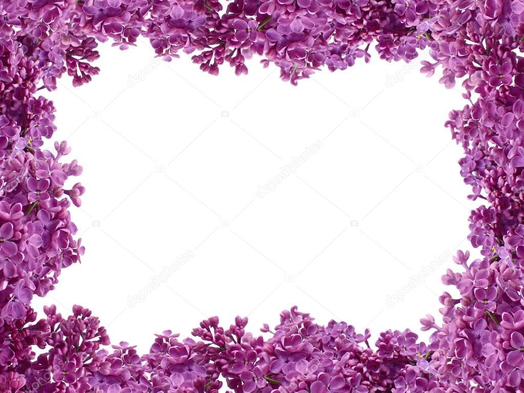 Flores Lilas Con Rosas Sobre Fondo: Marco De Flores Lilas Sobre Fondo Blanco