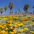 Stock Photo: Flower field and palm trees
