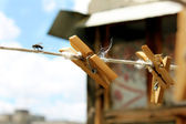 Wooden clothespins and fly — Stock Photo