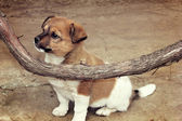Puppy and vine — Stock Photo