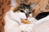 猫和刺鼻 — 图库照片