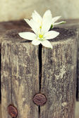White flowers on a log — Stock Photo