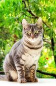 Tabby cat sits — Stock Photo