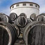 ������, ������: Oak wine casks on vineyard
